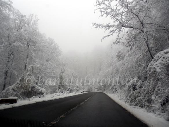 chei_iarna