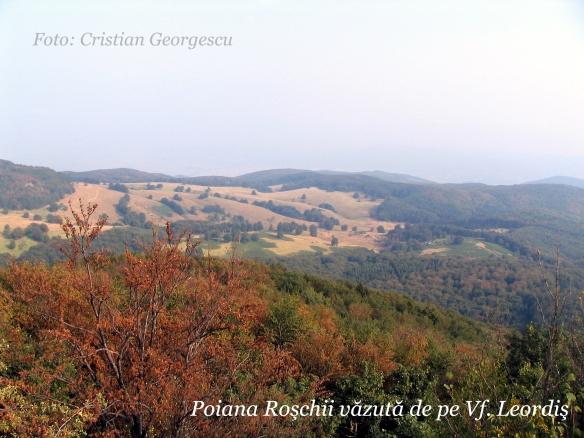 roschii_leordis